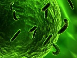 Bakterien greifen Zelle an (Illustration/ Foto: renjith krishnan)